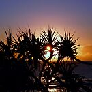 Cabbage Tree Dawn....... Burleigh Heads Qld by BK Photography
