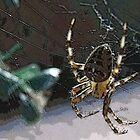Spider by exvista