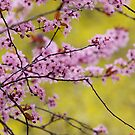 Spring in Portland OR by Charlie  Lin