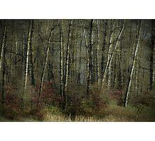 Trees of November Photographic Print