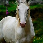 """Fluff"" A Sabino Stallion by Sophie Lapsley"