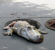 Alligators in the Sewers by blindmel