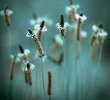 ...sparklers... by Geoffrey Dunn