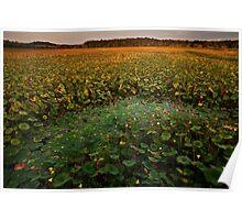 September's Full Lotus landscape Poster