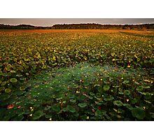 September's Full Lotus landscape Photographic Print