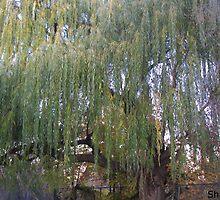 Willow Tree by Shadyxx