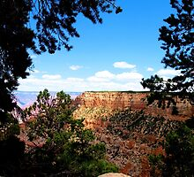 Grand Canyon Through The Trees by tvlgoddess