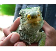 Lizard Saying Hello Photographic Print