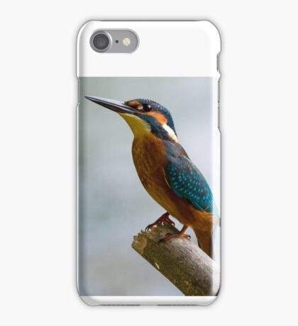 Beauty of Nature - Common Kingfisher  iPhone Case/Skin