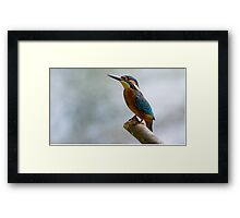 Beauty of Nature - Common Kingfisher  Framed Print