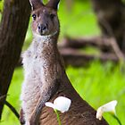 Kangaroo and Flower by Paul Fulwood