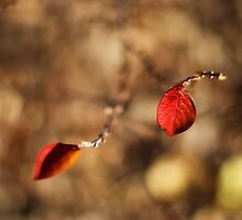 Red Leaves by Crystal Zacharias