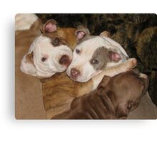 Caught In A Cuddle! Canvas Print