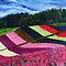 Fields of Colour by Nira Dabush