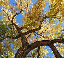 Cottonwood Tree by Loree McComb
