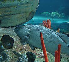 Sydney Aquarium by Jojie Certeza