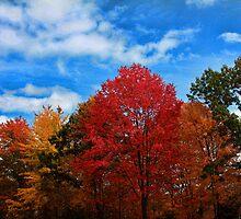 Autumn in New York by Irish