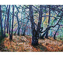 'Woods (A Clearing)' Photographic Print