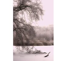 Pink Frost II Photographic Print