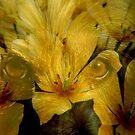 Merge of Flora & Fauna by Paul Revans