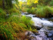 Oak Creek at dawn by Linda Sparks