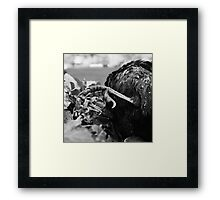 Rain, Tree, Crow Framed Print