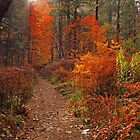Into and through the color by Paul Kavsak