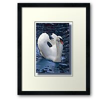 From an angry Swan's point of view Framed Print