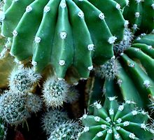 Cacti Collection ^ by ctheworld