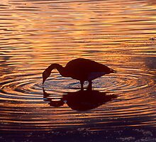 Meditation by Gregory J Summers