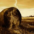 Rolled Hay Bales #1 - Horsham by Matthew Floyd