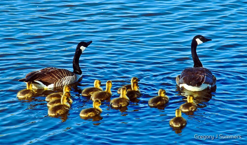 The Family Swim by nikongreg