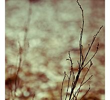 branch and ghost Photographic Print