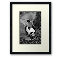 dont you come near my ball...... Framed Print