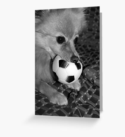 dont you come near my ball...... Greeting Card