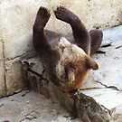 Baby bear exercises by Lidiya