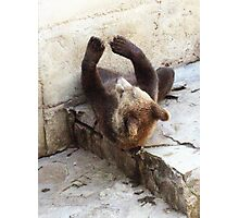 Baby bear exercises Photographic Print