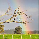 Heart of the Rainbow by Coralie Plozza
