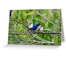 Blue Wren Family  Greeting Card
