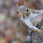 Posing Juvenile Squirrel  by Lee Hiller