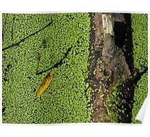 Algae, Log and Leaf Poster