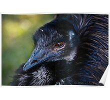 Emblematic Bird Poster