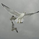 Soaring Gull by quiltmaker