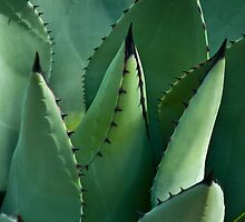 Mescal Agave by ArianaMurphy