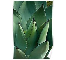 Mescal Agave Poster