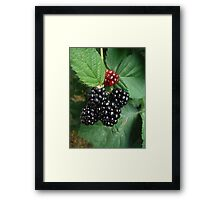 Berry Nice to Met You Framed Print