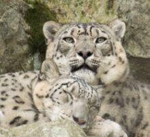 Snow Leopards Sticker