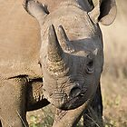 Black Rhino Close Up  by Michael  Moss