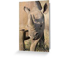 Black Rhino Close Up  Greeting Card