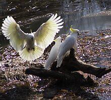 Angel by Peter Pevy
